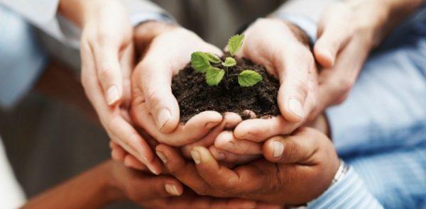 philanthropy_seedling
