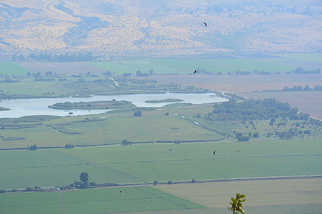 10 Black Kites over Naftali Mountains receiving the morning thermals on the sunny side. In the back is the Hula Valley and the bottom of Golan Heights. Photo by Jotpe via Wikimedia Commons.